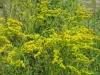 7-24-13-flowers-056