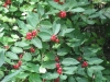 7-24-13-flowers-067
