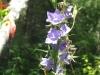 7-24-13-flowers-095