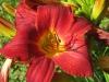 7-24-13-flowers-097