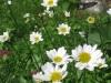 7-24-13-flowers-109